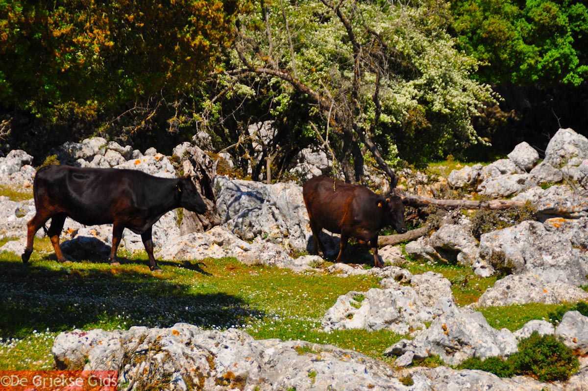 foto Schitterend landschap - Kefalonia - Foto 49