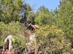 Antisamos - Antisami - Kefalonia - Foto 243 - Foto van De Griekse Gids