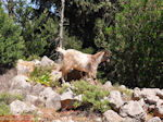 Antisamos - Antisami - Kefalonia - Foto 246 - Foto van De Griekse Gids