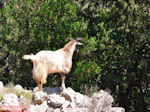 Antisamos - Antisami - Kefalonia - Foto 247 - Foto van De Griekse Gids