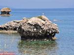 Van Skala Kefalonia naar Poros Kefalonia - Kefalonia - Foto 429 - Foto van De Griekse Gids