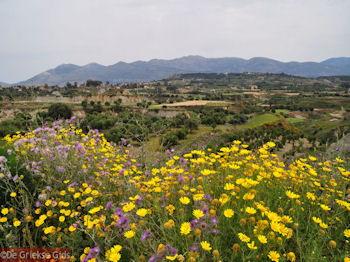 Schiereiland Paliki - Kefalonia - Foto 535 - Foto van De Griekse Gids