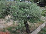Lassi - Kefalonia - Foto 561 - Foto van De Griekse Gids