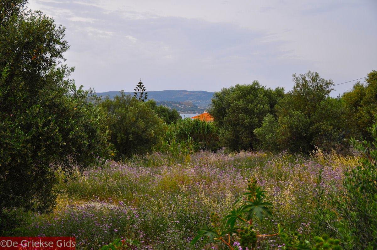 foto Lassi - Kefalonia - Foto 564