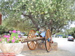 Lassi - Kefalonia - Foto 566 - Foto van De Griekse Gids