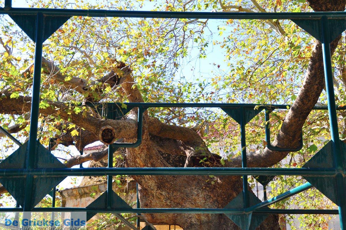 foto Hippocrates plataan | Kos stad | Griekenland foto 2