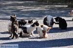 Poesjes en katten bij het Asklepion | Eiland Kos | Griekenland foto 1 - Foto van De Griekse Gids