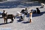 Poesjes en katten bij het Asklepion | Eiland Kos | Griekenland foto 2 - Foto van De Griekse Gids