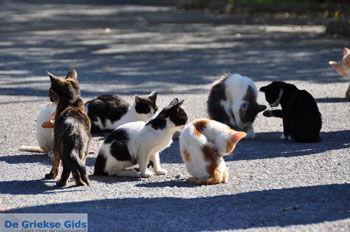 Poesjes en katten bij het Asklepion | Eiland Kos | Griekenland foto 1 - Foto van https://www.grieksegids.nl/fotos/eilandkos-fotos/350pixels/eiland-kos-026.jpg