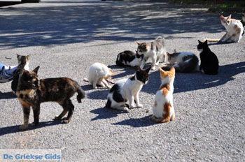Poesjes en katten bij het Asklepion | Eiland Kos | Griekenland foto 2 - Foto van https://www.grieksegids.nl/fotos/eilandkos-fotos/350pixels/eiland-kos-027.jpg