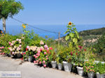 Mooie bloemen in Athani foto 2 - Lefkas (Lefkada) - Foto van De Griekse Gids
