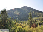 De groene natuur in het berggebied bij Englouvi - Lefkas (Lefkada) - Foto van De Griekse Gids