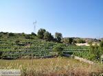 Druivengaard nabij Agios Donatos Englouvi - Lefkas (Lefkada) - Foto van De Griekse Gids