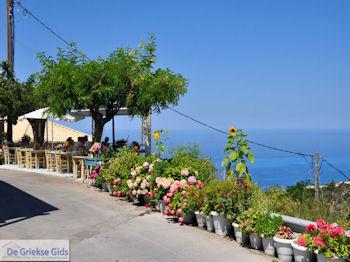 Mooie bloemen in Athani - Lefkas (Lefkada) - Foto von De Griekse Gids