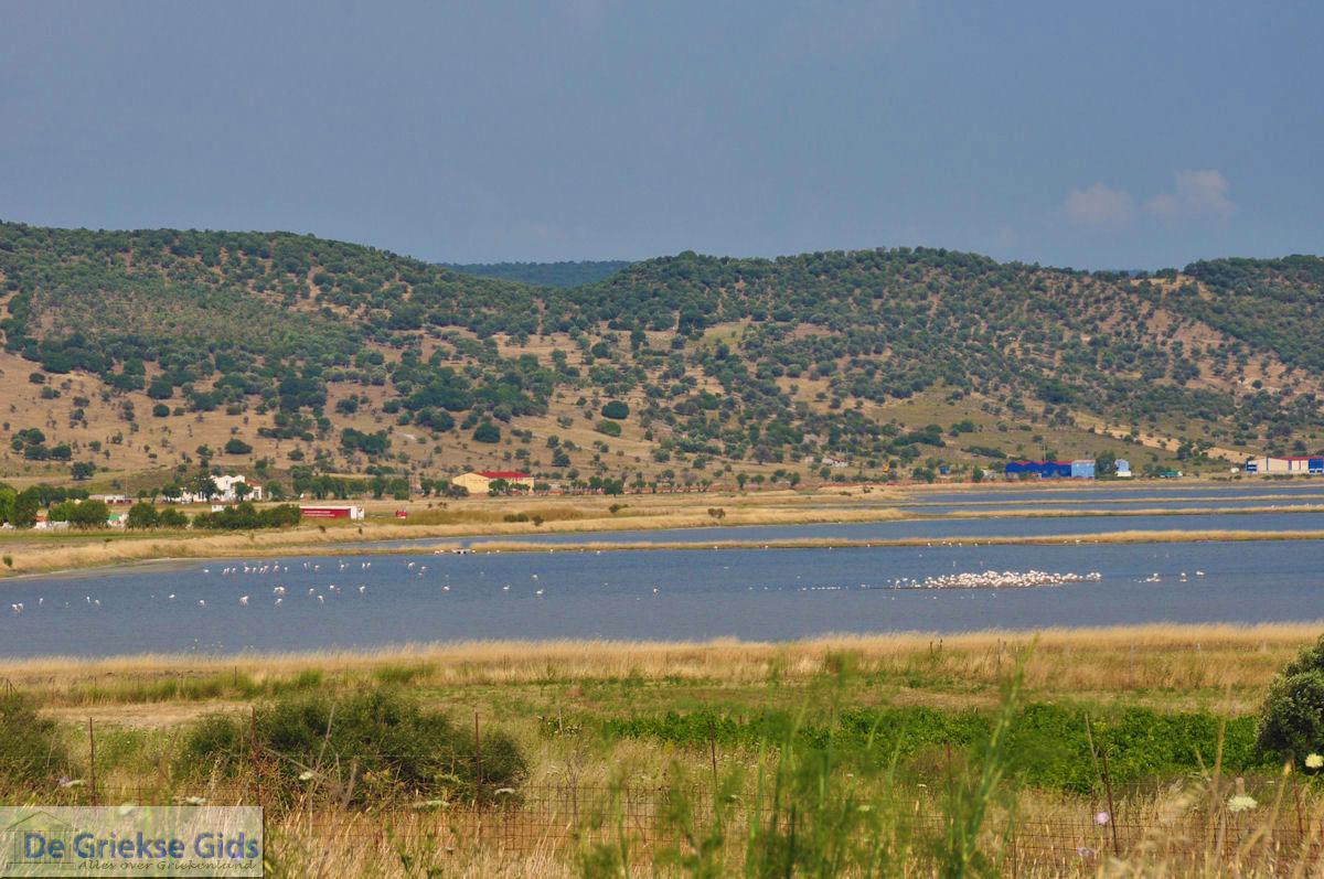 foto Natuurgebied voor vogels aan de baai van Kalloni foto 2