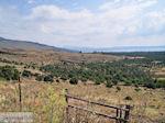 Olijfbomen ten oosten van de baai van Kalloni - Foto van De Griekse Gids