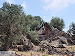 Ten westen van de baai van Kalloni foto 003 - Foto van De Griekse Gids