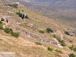 Versteende woud bij Sigri foto1 - Foto van De Griekse Gids