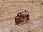 Versteende woud bij Sigri foto2 - Foto van De Griekse Gids