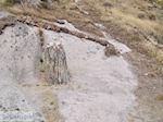 Versteende woud bij Sigri foto6 - Foto van De Griekse Gids