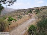 Versteende woud bij Sigri foto12 - Foto van De Griekse Gids