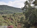 Grens olijfbomen en bossen op de weg Petra-Kalloni foto 2 - Foto van De Griekse Gids