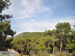 Bossen in noord Lesbos - Foto van De Griekse Gids