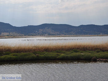 Beschermd natuurgebied baai van Kalloni (Lesbos) - Foto van https://www.grieksegids.nl/fotos/eilandlesbos/350pixels/eiland-lesbos-foto-007.jpg