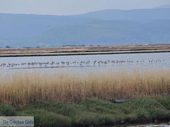 Beschermd natuurgebied voor vogels baai van Kalloni (Lesbos) - Foto van https://www.grieksegids.nl/fotos/eilandlesbos/350pixels/eiland-lesbos-foto-009.jpg