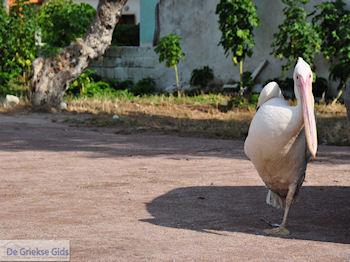 De pelekaan van Skala Kallonis - Foto van https://www.grieksegids.nl/fotos/eilandlesbos/350pixels/eiland-lesbos-foto-014.jpg