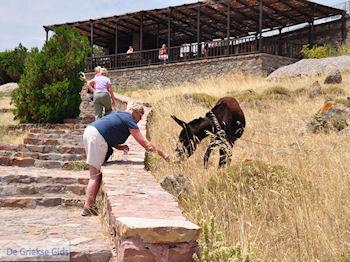 Versteende woud bij Sigri - Even de ezel voeden - Foto van https://www.grieksegids.nl/fotos/eilandlesbos/350pixels/eiland-lesbos-foto-105.jpg