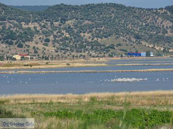 Natuurgebied voor vogels aan de baai van Kalloni foto 1 - Foto van https://www.grieksegids.nl/fotos/eilandlesbos/350pixels/eiland-lesbos-foto-262.jpg