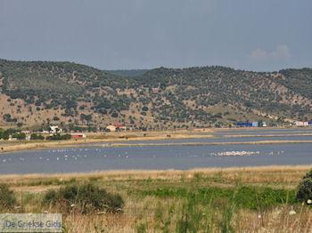 Natuurgebied voor vogels aan de baai van Kalloni foto 2 - Foto van https://www.grieksegids.nl/fotos/eilandlesbos/350pixels/eiland-lesbos-foto-263.jpg