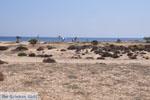 Agios Prokopios strand | Eiland Naxos | Griekenland | Foto 1 - Foto van De Griekse Gids