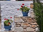 Bloemen Piso Livadi Paros | Cycladen | Griekenland foto 11 - Foto van De Griekse Gids