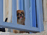 Naoussa Paros | Cycladen | Griekenland foto 30 - Foto van De Griekse Gids