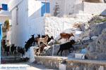 Pserimos Griekenland | De Griekse Gids | Foto 33 - Foto van De Griekse Gids