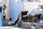 Pserimos Griekenland | De Griekse Gids | Foto 34 - Foto van De Griekse Gids