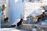 Pserimos Griekenland | De Griekse Gids | Foto 35 - Foto van De Griekse Gids