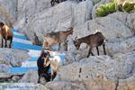 Pserimos Griekenland | De Griekse Gids | Foto 39 - Foto van De Griekse Gids