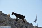 Pserimos Griekenland | De Griekse Gids | Foto 40 - Foto van De Griekse Gids