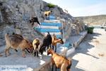 Pserimos Griekenland | De Griekse Gids | Foto 41 - Foto van De Griekse Gids