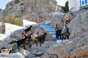 Pserimos Griekenland | De Griekse Gids | Foto 36 - Foto van De Griekse Gids
