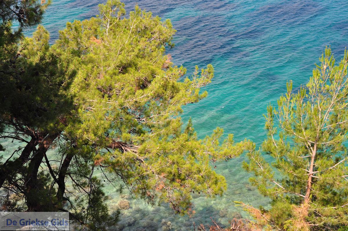 foto Bomen tot aan de zee bij Kokkari (Strand Tsamadou) - Eiland Samos
