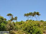 Groene natuur van Samos - Eiland Samos - Foto van De Griekse Gids