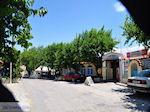 Taverna Votsalakia in Kampos - Eiland Samos - Foto van De Griekse Gids