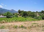 Druivengaarden langs de weg van Marathokampos naar Karlovassi - Eiland Samos - Foto van De Griekse Gids