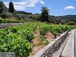 Wijngaarden langs de weg van Marathokampos naar Karlovassi - Eiland Samos - Foto van De Griekse Gids