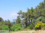 De natuur op de heuvels rond Karlovassi - Eiland Samos - Foto van De Griekse Gids