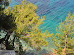 Bomen tot aan de zee bij Kokkari (Strand Tsamadou) - Eiland Samos - Foto van De Griekse Gids